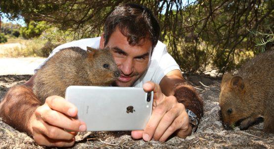 Roger Federer quokka selfie